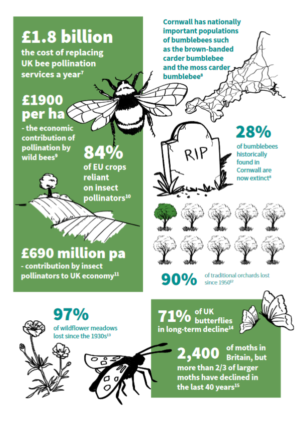 £1.8 billion cost of replacing bee pollination 28% Cornish bumblebees now extinct