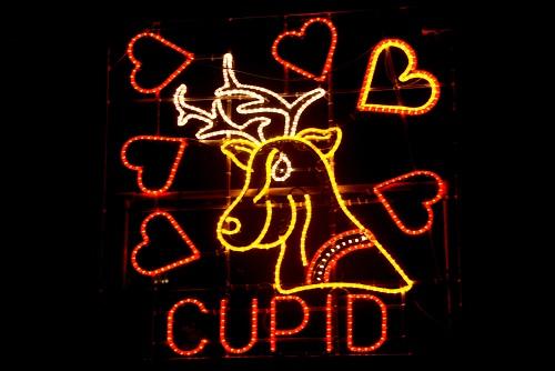 Reindeer Cupid 2013